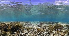 Mass bleaching of coral reefs in Taiwan waters reported
