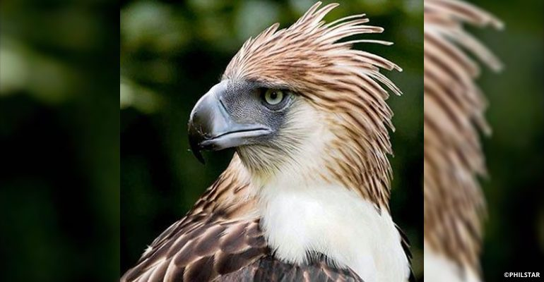 Iconic Philippine eagle Pag-asa dies at 28