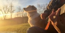 acoustic-trench-dog-maple-passed-away